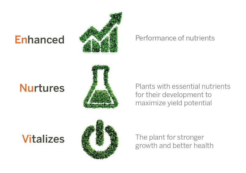 Enhance, Nurture and Vitalize